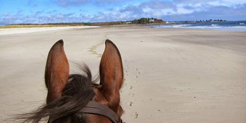 horse riding on maine beaches