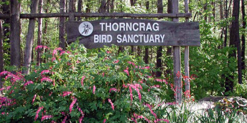 thorncrag sanctuary