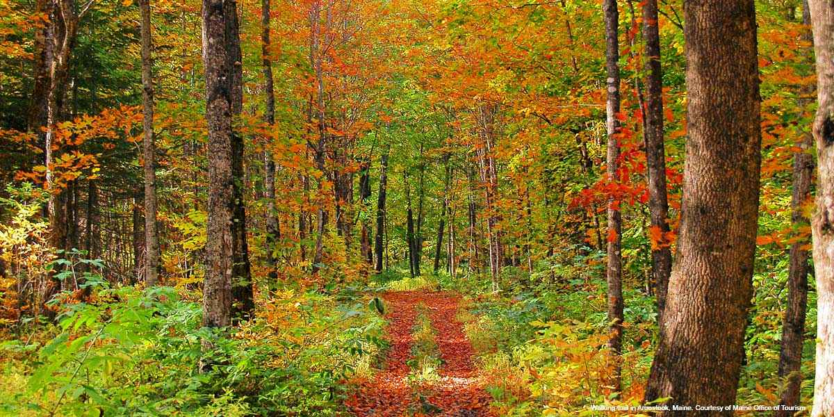 Walking trail in Aroostook, Maine. Courtesy of Maine Office of Tourism