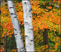 acadia maine mountains oceanfront reveal colorful fall foliage drives in 2017